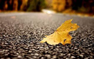 Бесплатные фото дорога,асфальт,текстура,лист,желтый