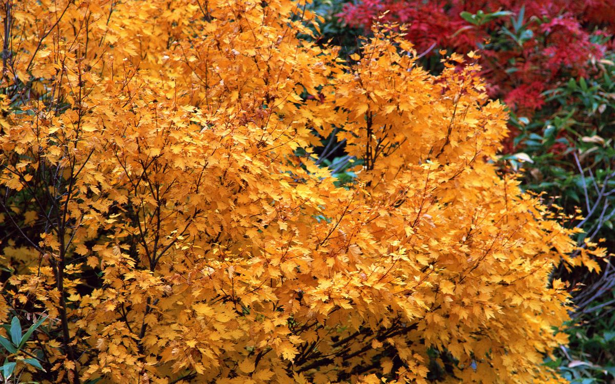 Photos for free multicolored, autumn, trees - to the desktop