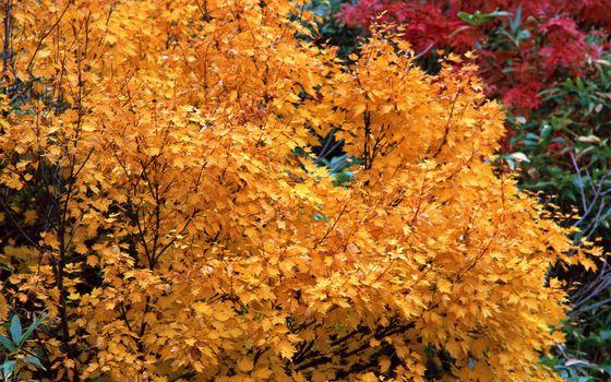 Photo free multicolored, autumn, trees
