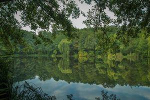 Бесплатные фото озеро, лес, деревья, природа