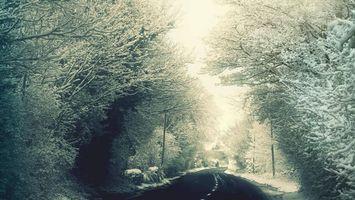 Фото бесплатно зимняя дорога, ветви, снег