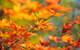 Photo free branches, leaves, orange