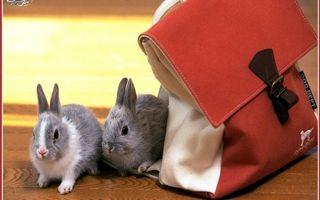 Фото бесплатно кролики, декоративные, морда, уши, лапки, шерсть, сумка