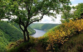 Бесплатные фото лето,горы,трава,кустарник,деревья,река