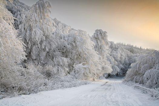 Photo free winter, landscape, snow on trees