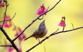 Бесплатные фото птичка,клюв,хвост,перья,лапки,ветви,цветочки