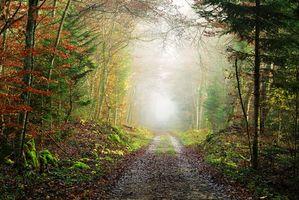 Заставки осень,лес,дорога,деревья,туман,пейзаж