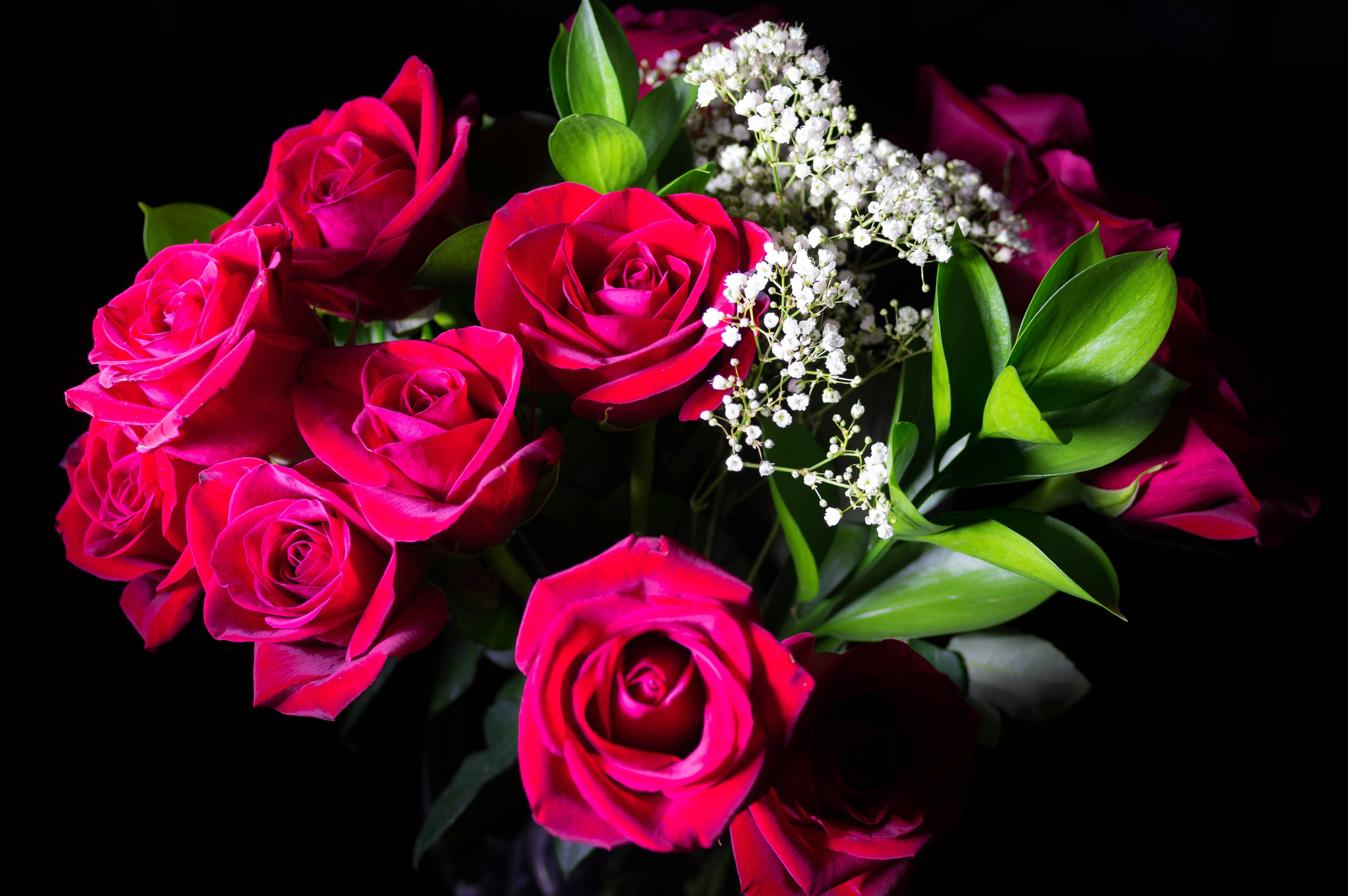 роза, розы, цветы