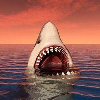 Фото бесплатно акула, хищник, оскал