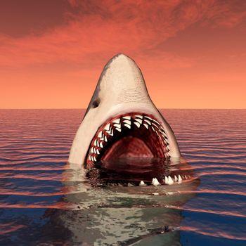 Заставка акула, оскал на экран