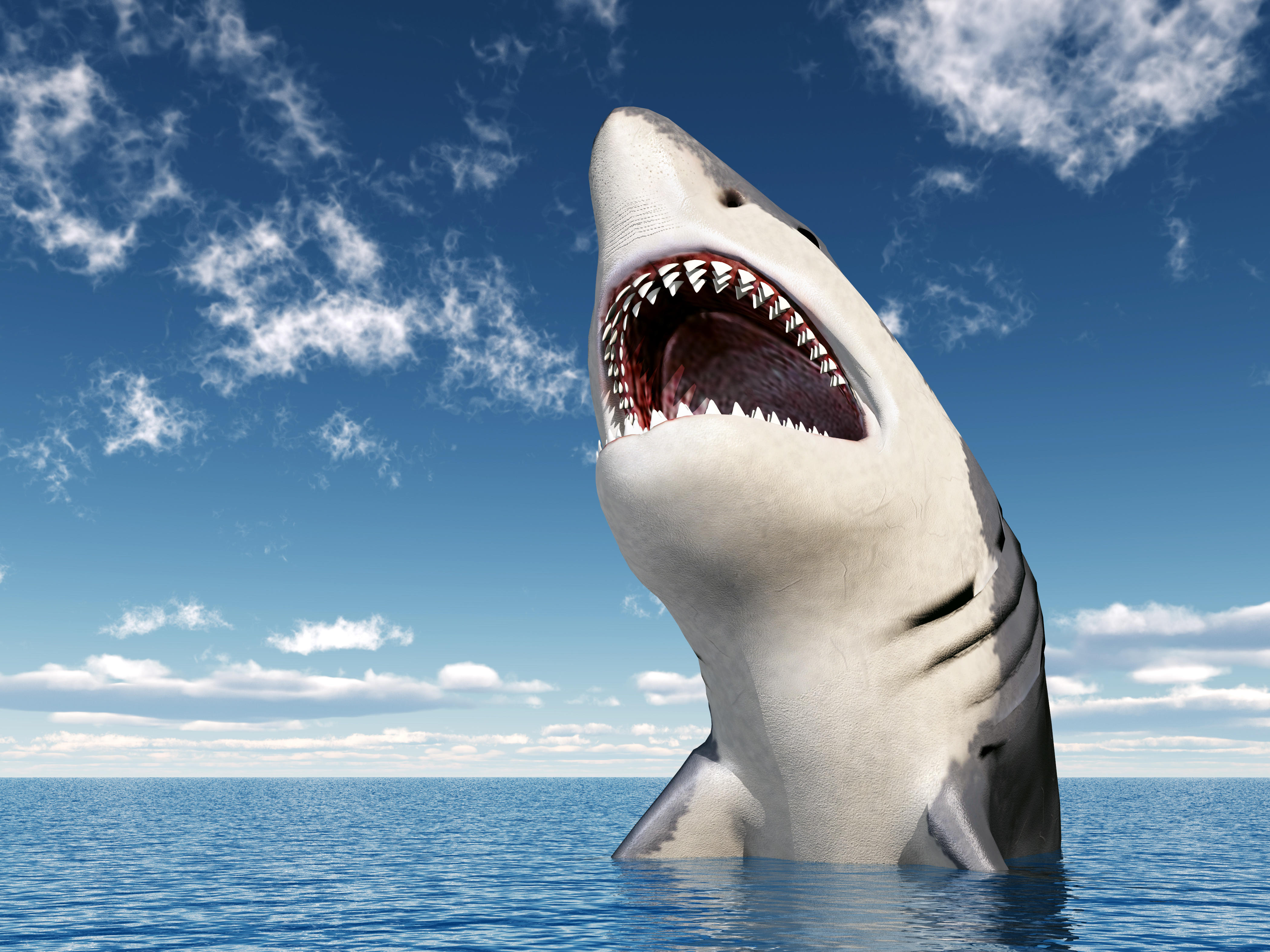 обои акула, хищник, оскал, опасность картинки фото