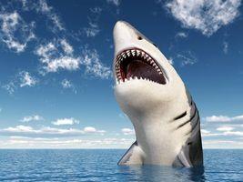 Фото бесплатно акула, хищник, арт