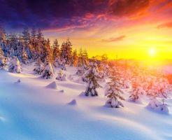 Обои зима, снег, ёлка, закат, деревья, сугробы, пейзаж