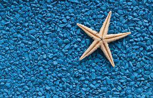 Бесплатные фото галька,гравий,камни,морская звезда