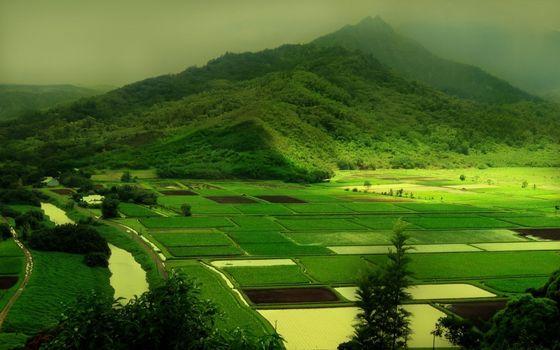 Бесплатные фото гора,подножье,деревья,поля,рисовые,арык