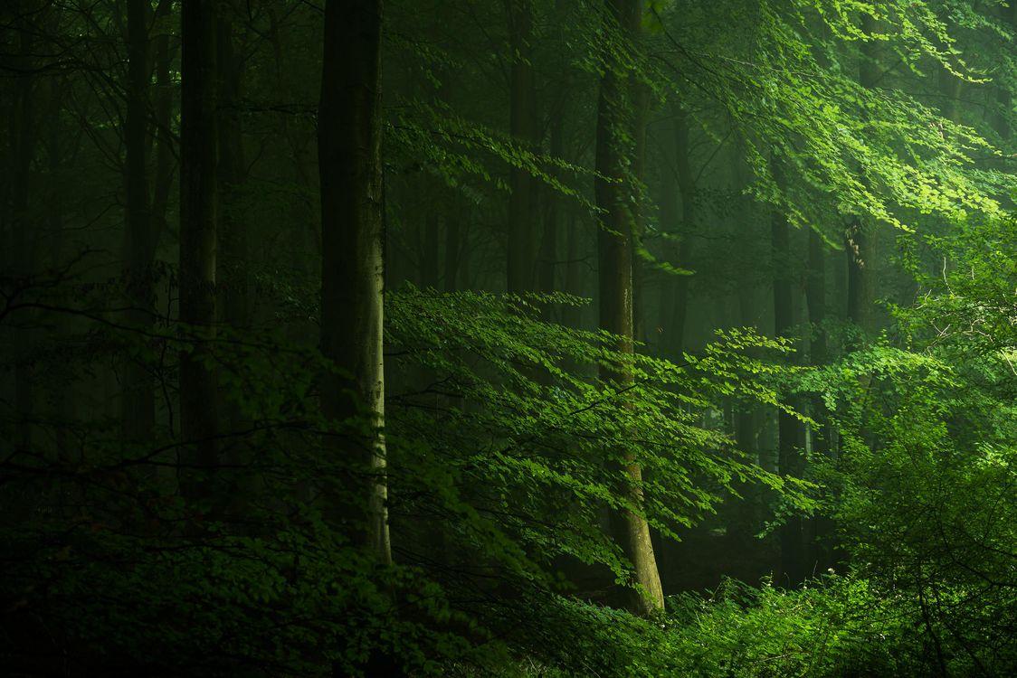 фото леса для смартфона название