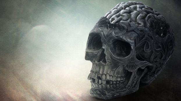 Photo free drawing, skull, gyrus