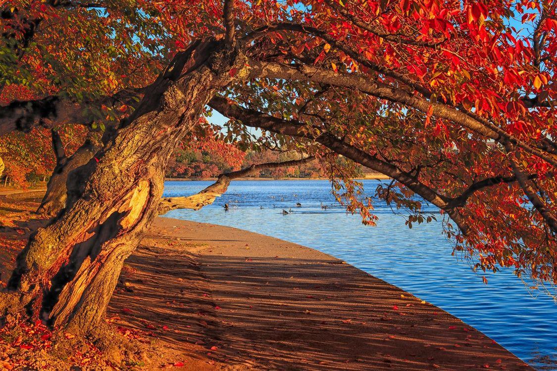 Фото бесплатно Вашингтон, округ Колумбия приливного бассейна, осень - на рабочий стол