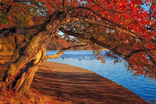 Фото бесплатно Вашингтон, округ Колумбия приливного бассейна, осень