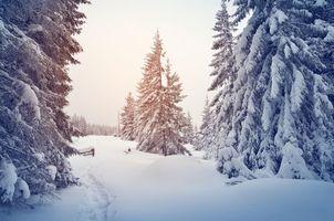Бесплатные фото зима,снег,сугробы,тропинка,деревья,пейзаж
