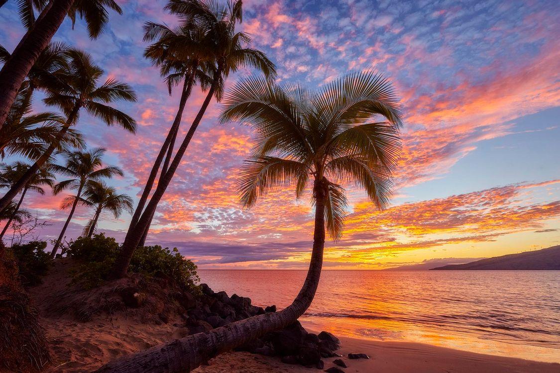 дедушкой красивые картинки с пальмами и закатом закрытая