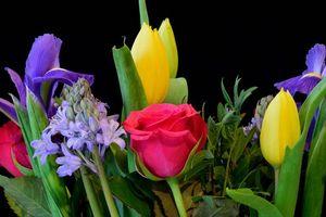 Фото бесплатно роза, тюльпаны, гиацинт