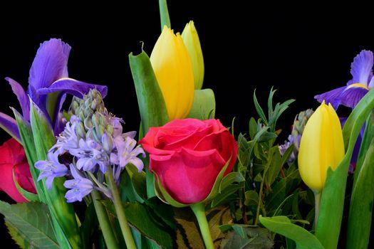 Бесплатные фото роза,тюльпаны,гиацинт,цветы,флора,чёрный фон