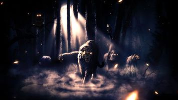 Бесплатные фото темный лес,тигр,лев,медведь,ночь,темно,глаза