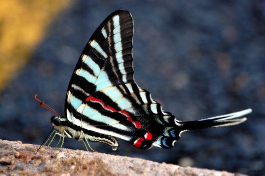 Фото бесплатно бабочка, черные, крылья