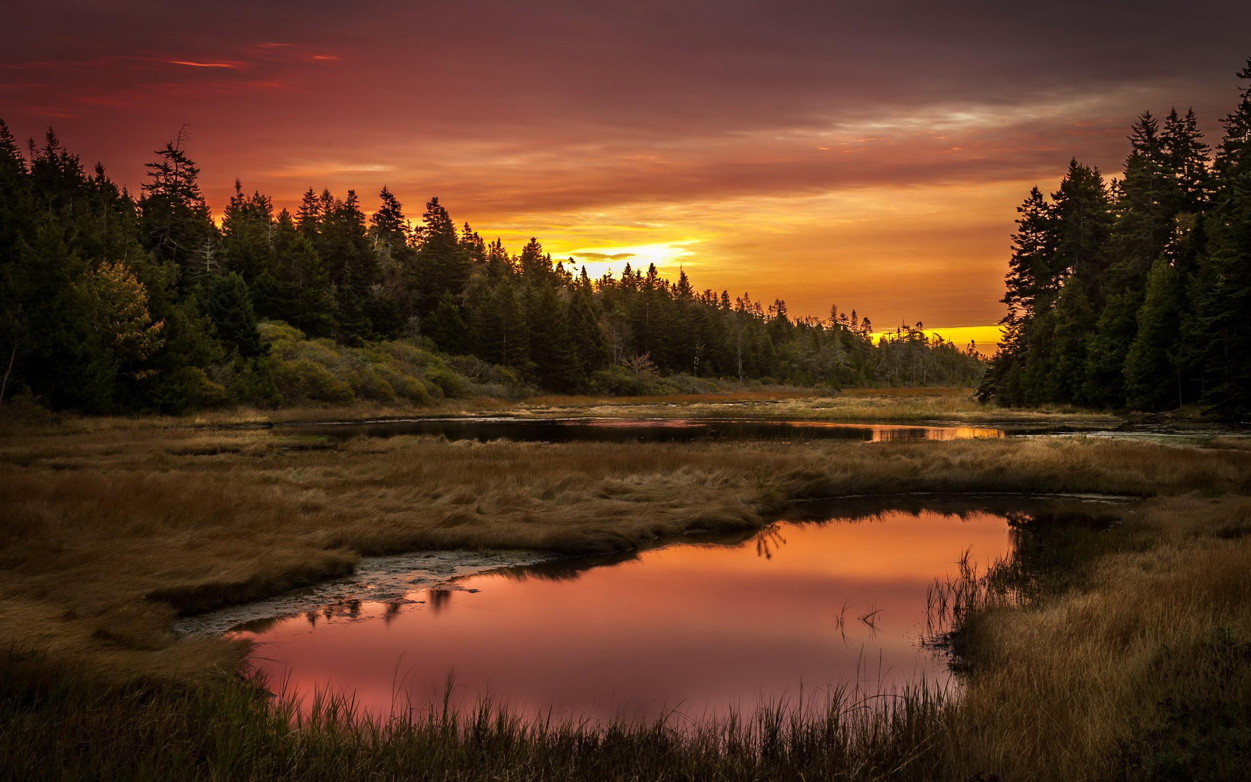болото, лес, трава