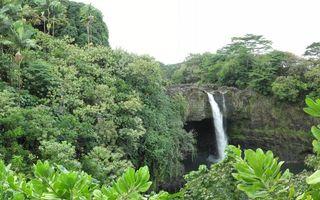 Бесплатные фото деревья,джунгли,водопад,вода,брызги,скала,листья