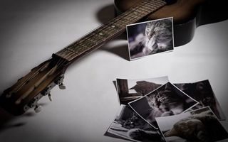Заставки гитара,струны,гриф,колки,фото,кошка,музыка