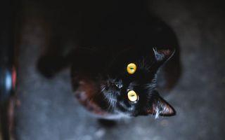 Бесплатные фото кошка,черная,глаза,желтые,уши,шерсть,кошки