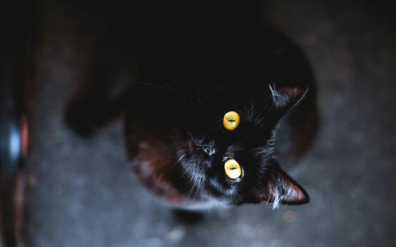 Фото бесплатно кошка, черная, глаза