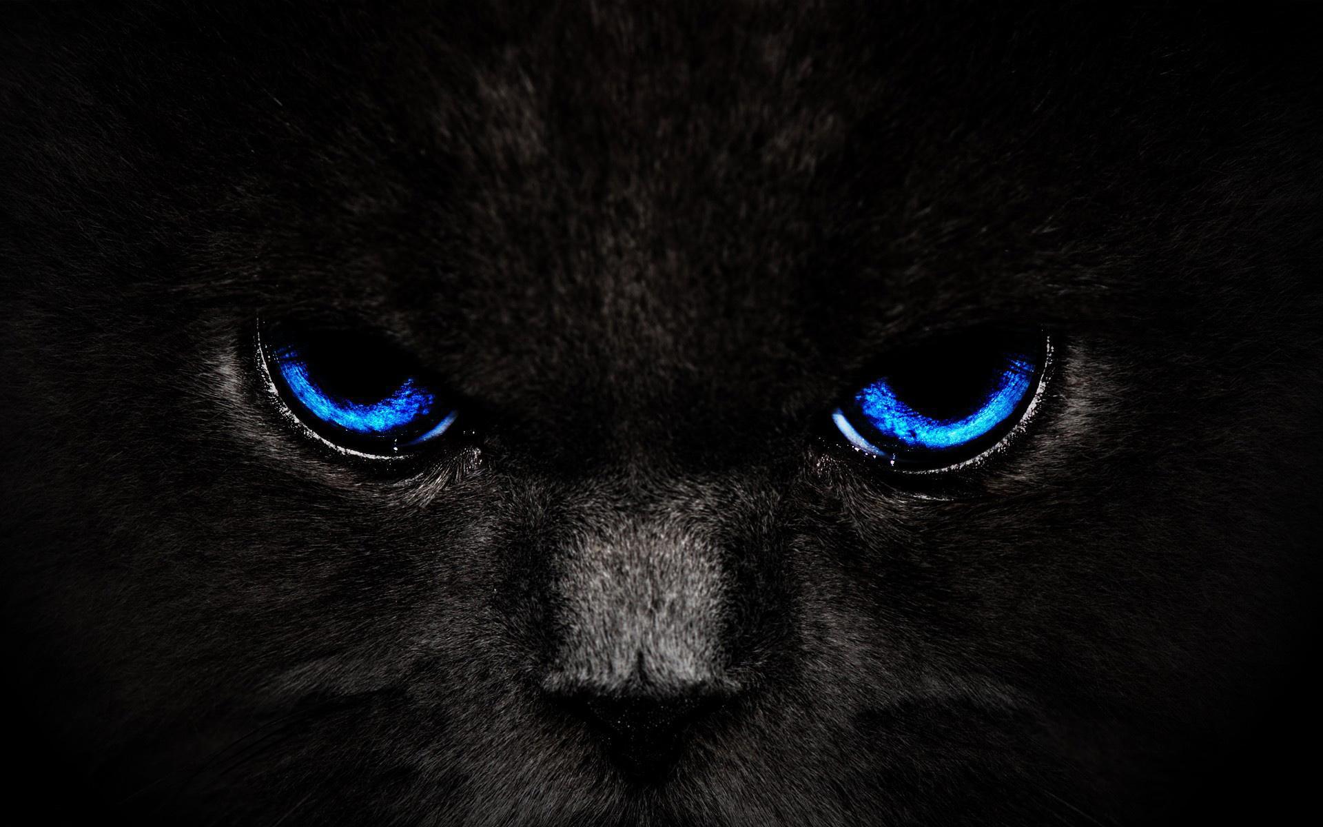 кот, черный, морда