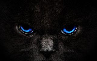 Бесплатные фото кот,черный,морда,шерсть,глаза,синие,кошки