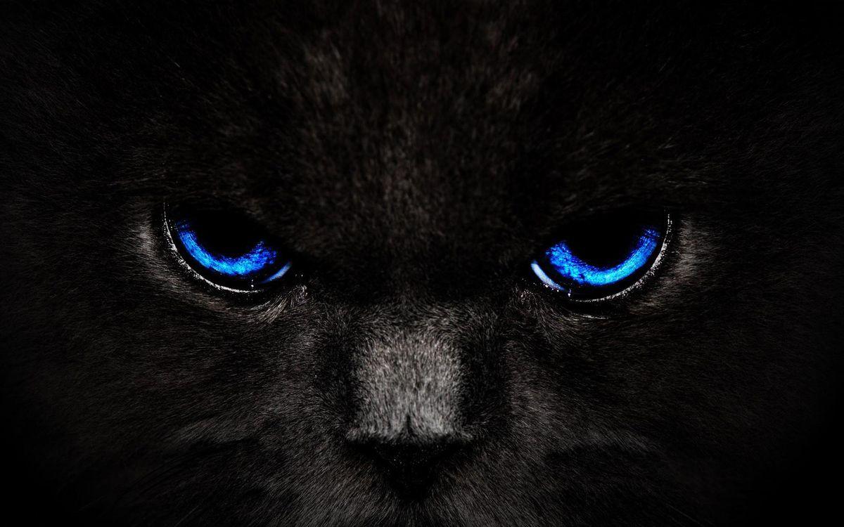 Фото бесплатно кот, черный, морда, шерсть, глаза, синие, кошки, кошки