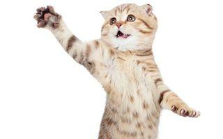 Бесплатные фото котенок,лапы,играет,белый,фон,кошки