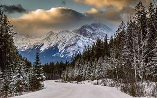 Бесплатные фото лес,деревья,снег,дорога,горы,зима,природа