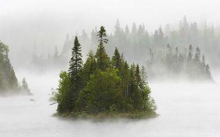 Бесплатные фото лес,елки,туман,деревья,далеко,трава,природа