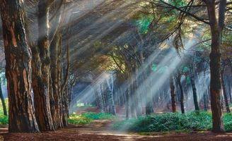 Фото бесплатно лес, лучи, свет