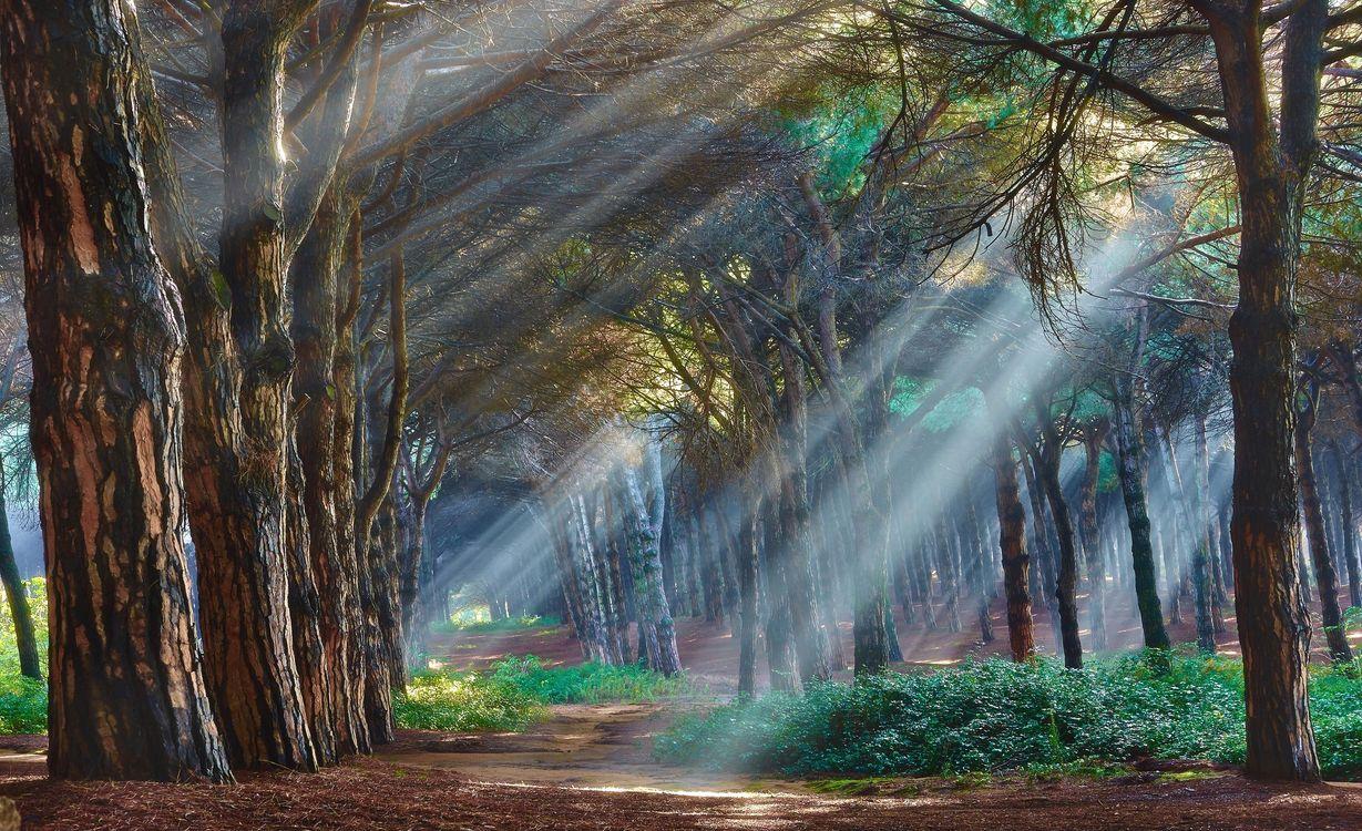 Фото бесплатно лес, лучи, свет, природа, природа