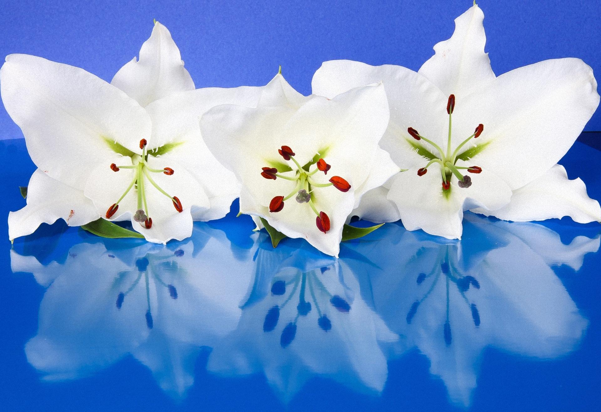 лилии, цветки, лепестки