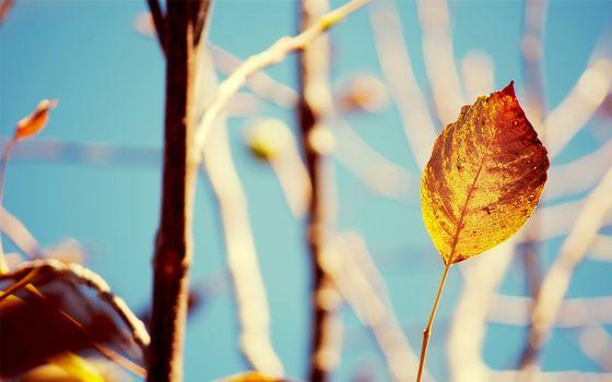 Photo free leaf, autumn, leaf fall