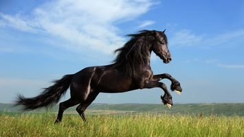 Photo free horse, field, grass