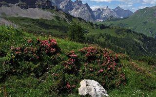 Бесплатные фото небо,облака,горы,трава,цветки,камень,скала