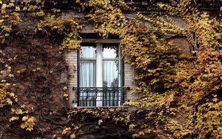 Заставки окно, дом, листья