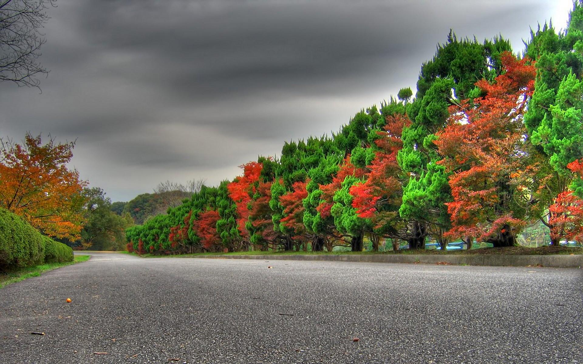 осень, дорога, асфальт