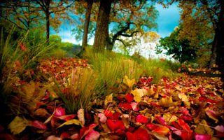 Заставки осень, трава, листва