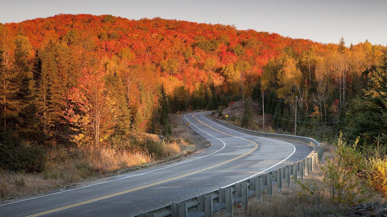 Фото бесплатно осень, деревья, листопад, дорога, асфальт, лес, небо, столбы, природа, природа - скачать на рабочий стол